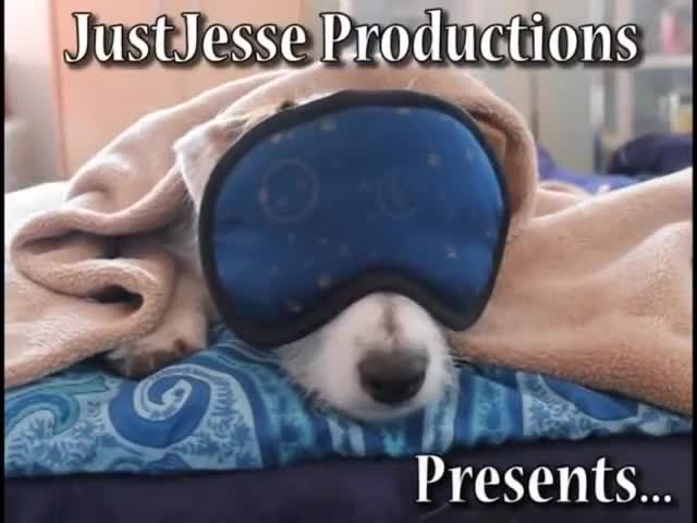 Watch sleepy GIF on Gfycat. Discover more JustJesse197, aerobics, amazing, bubble, does, dog, dogs, hand, horse, jack, jesse, rocking, russell, skateboard, stand, terrier, tricks, useful, with GIFs on Gfycat