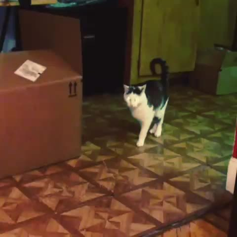 catpranks, unexpected, Payback (reddit) GIFs