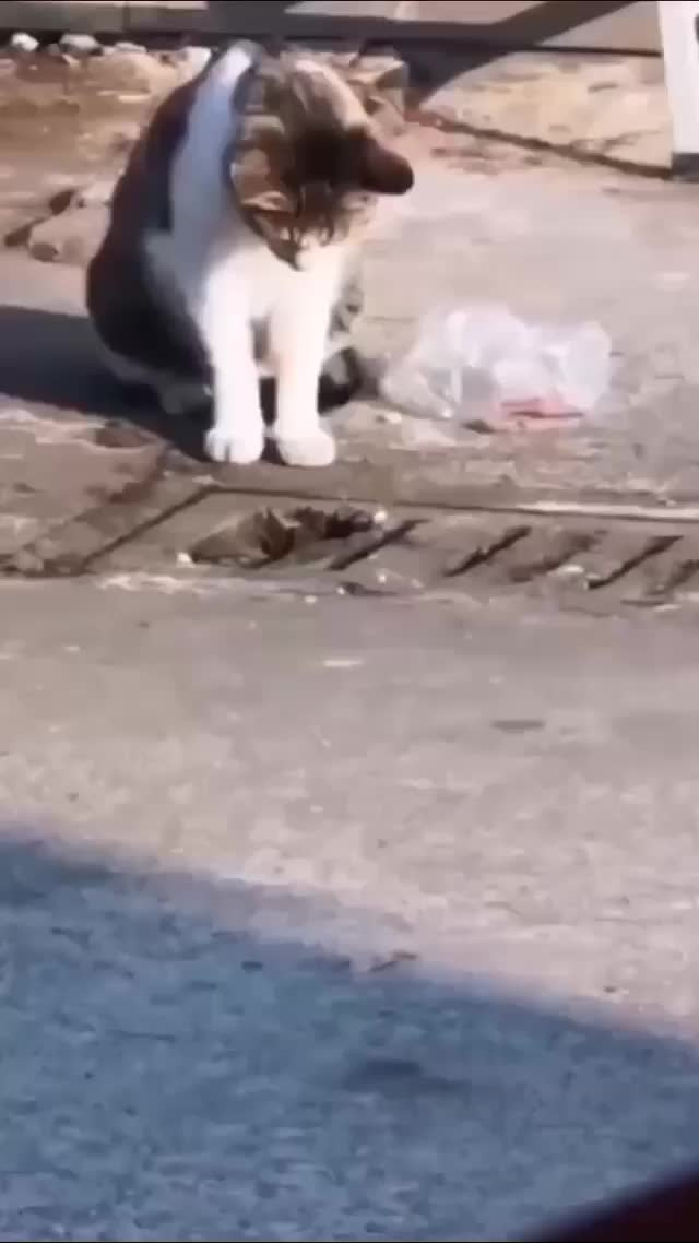 Watch and share Urban Kitty Hunting GIFs by cenotaph on Gfycat