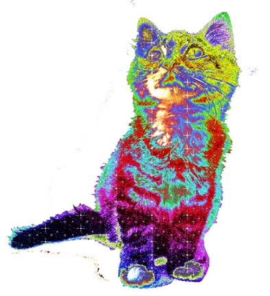 Watch and share Trippy Cat animated stickers on Gfycat