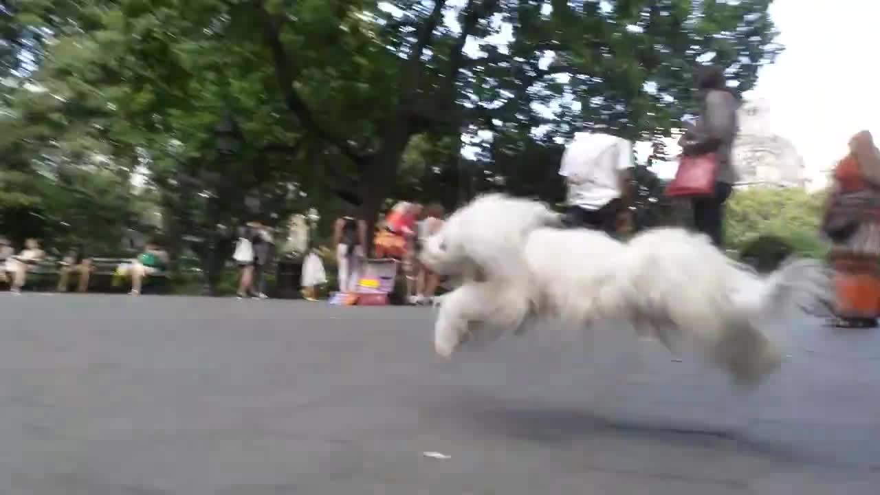 bakanewsjp, gifs, Puppet Dog Runs Around Park GIFs