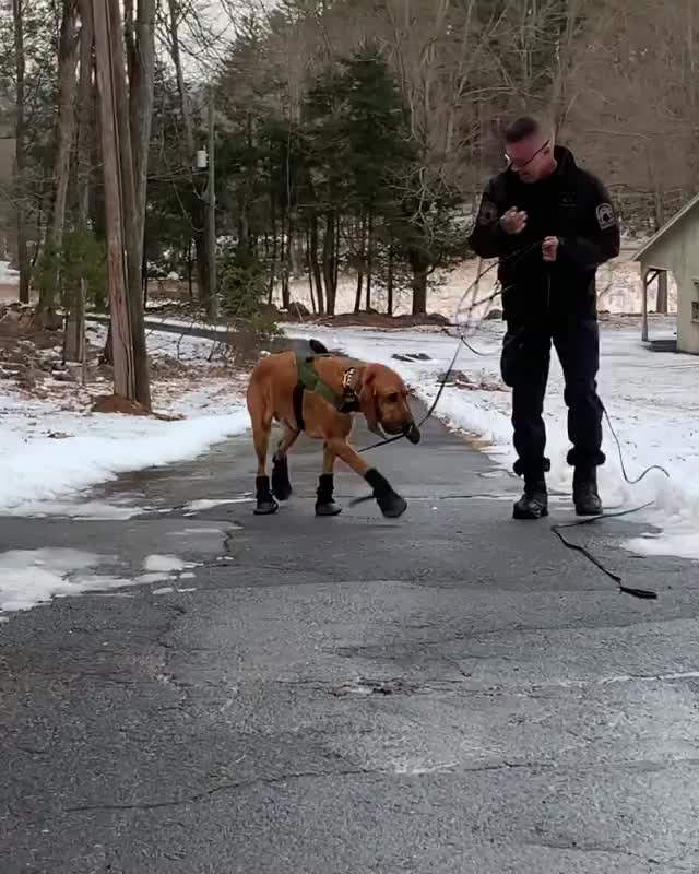 Watch this dog GIF on Gfycat. Discover more bigfeet, bloodhound, clompclomp, dog, funny, policek9, workingdog GIFs on Gfycat