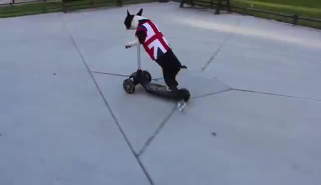 scooter dogs wear sneakers GIFs