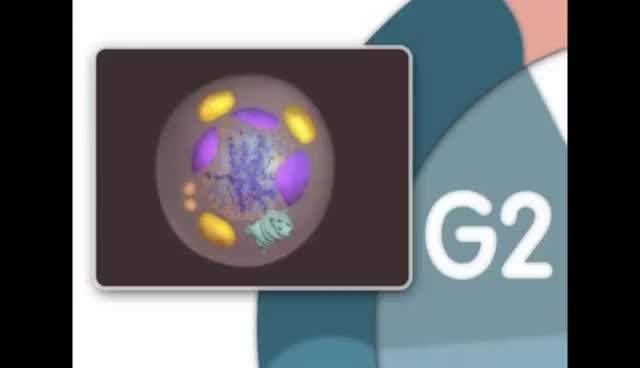 Watch and share ✔ MITOSIS - MADE SUPER EASY - ANIMATION GIFs on Gfycat