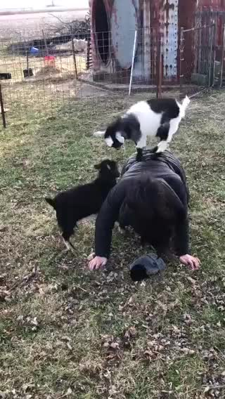 Watch and share Goat Parkour GIFs and Goats GIFs by FarSizzle on Gfycat