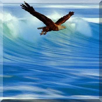 Watch and share Fly Like Eagle GIFs on Gfycat