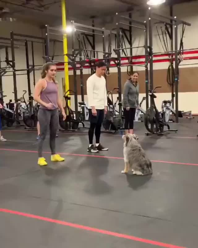 Watch and share Tesla Started A New Job This Week As A CrossFit Instructor GIFs by gangbangkang on Gfycat