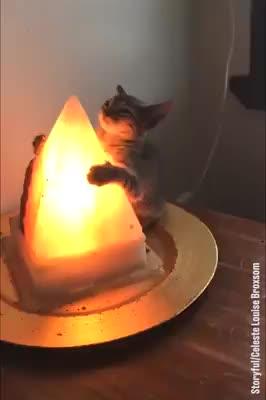 LADbible - Cat Hugs Salt Rock Lamp Facebook GIFs