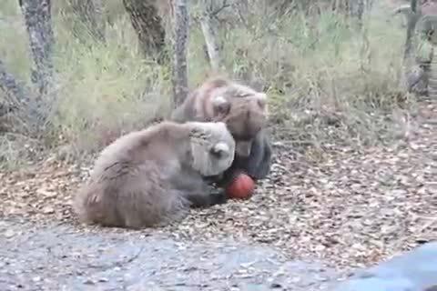 BearCubGIFs, bearcubgifs,  GIFs