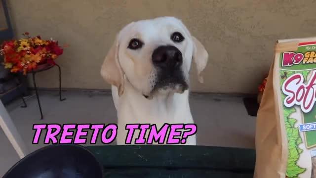 Watch and share Treats GIFs and Doggo GIFs by tustjzfjxfjxgjzjf on Gfycat