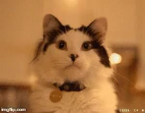 Watch Oreo The Talking Cat GIF on Gfycat. Discover more Cats of Tumblr, Cats of the internet, cats, chats, gatti, gatto, gifs, katzen, neko, pets, talking cat, theoreocat GIFs on Gfycat
