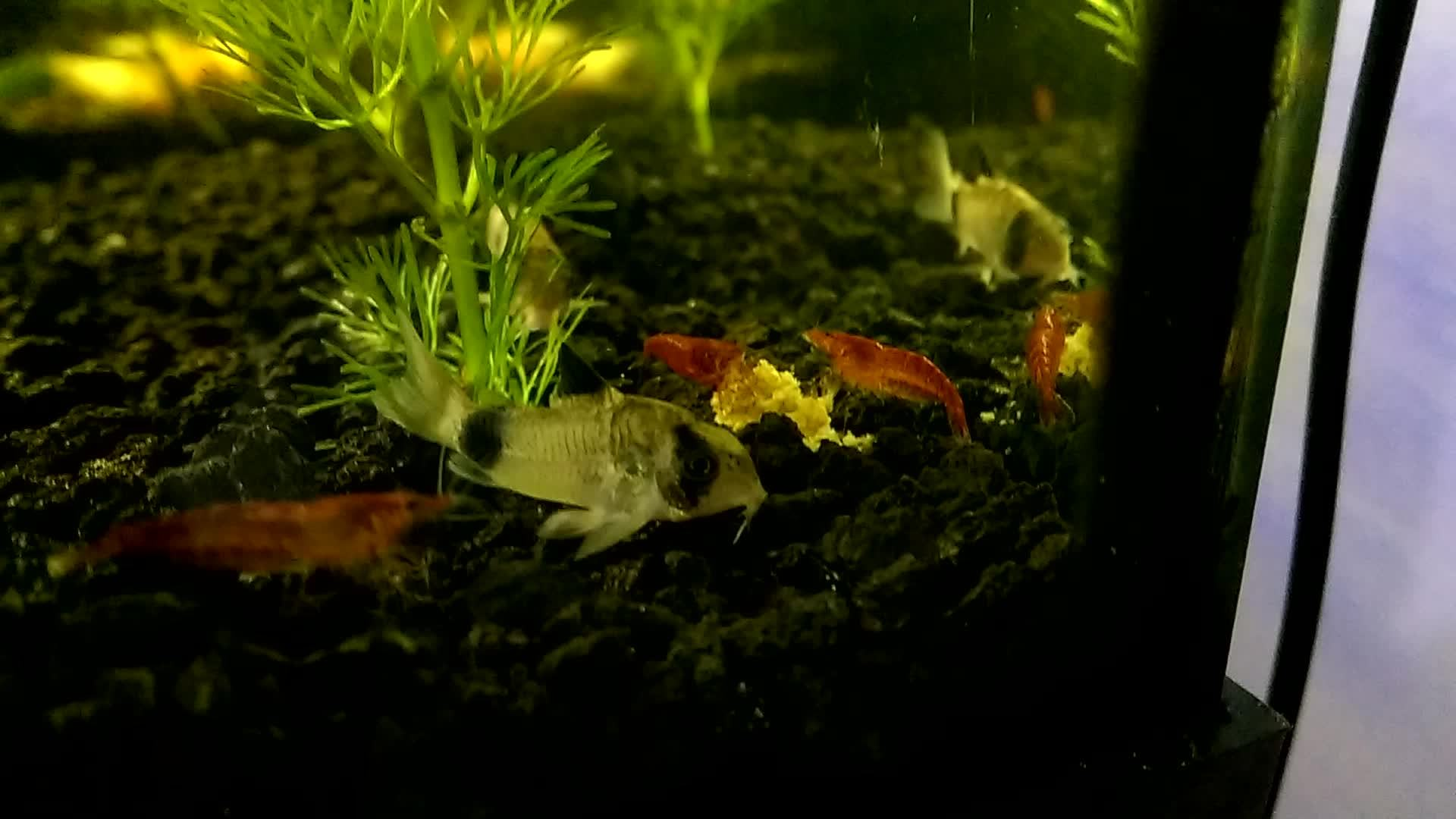 shrimptank, Dinner is served GIFs