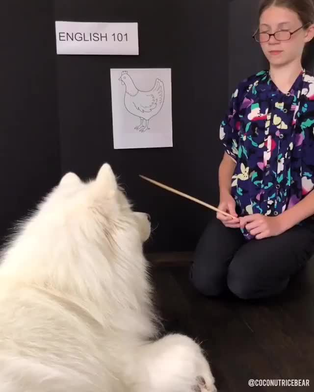 Watch and share Coconut Rice Bear GIFs and Dog GIFs on Gfycat