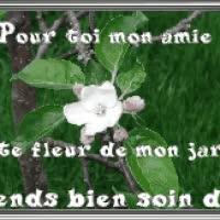 Watch and share Pour Toi Mon Amie Cette Fleur De Mon Jardin Prends Soin De Toi ! GIFs on Gfycat
