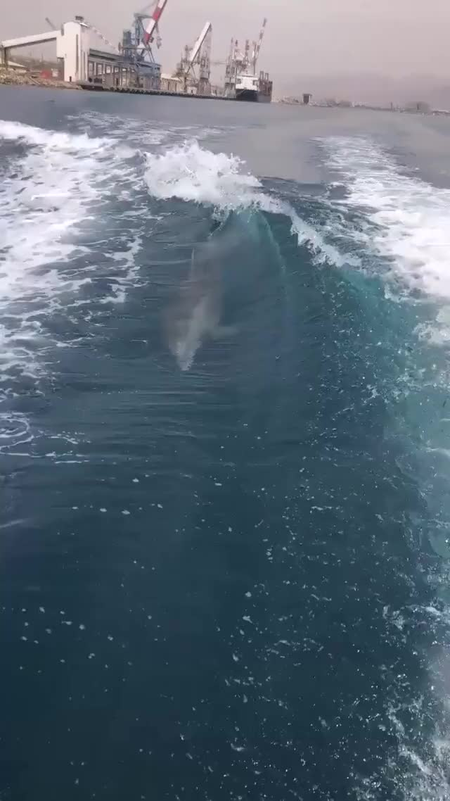 Watch and share Dolphins GIFs and Nature GIFs by longshanks on Gfycat