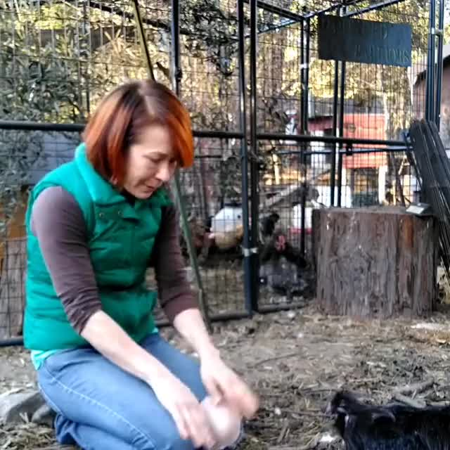 Watch and share Animal Sanctuary GIFs and Hen Harbor GIFs by lnfinity on Gfycat