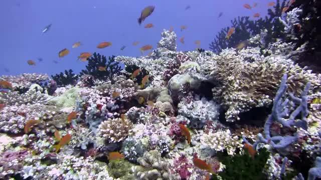 Watch and share Beautiful GIFs and Aquarium GIFs on Gfycat