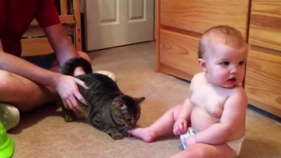 catslaps, catsmurderingtoddlers, childrenfallingover, Cat attacks Baby GIFs