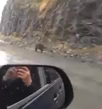 Grizzly bear running along at full speed GIFs