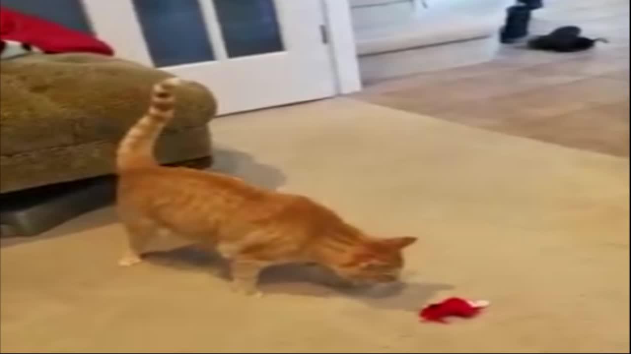 catgifs, That damn toy drives me crazy GIFs