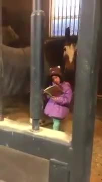 Watch Girl Reads to Horses Every Morning Before School GIF by @realdsr on Gfycat. Discover more every day, girl, horse, news, reading, reading to, school, stables, storyful, viral GIFs on Gfycat