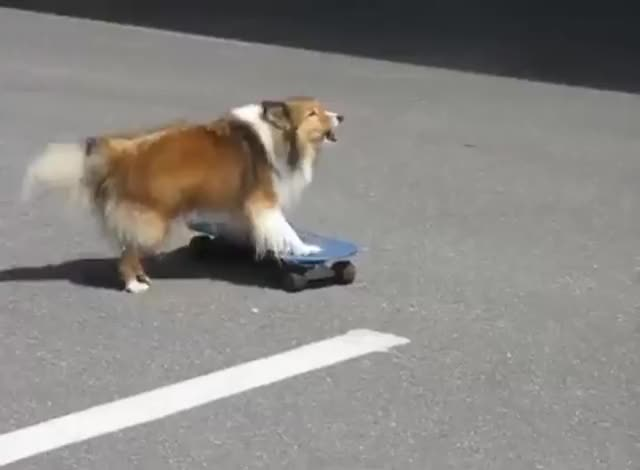 Watch this dog GIF by @likkaon on Gfycat. Discover more dog, skateboard, skateboarding GIFs on Gfycat