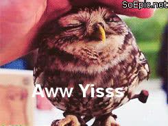 aww yiss owl GIFs