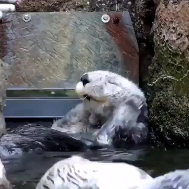 Watch and share Otters GIFs and Bath GIFs on Gfycat