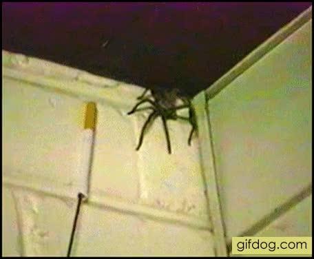 Гифка про паука на стене видеть одном