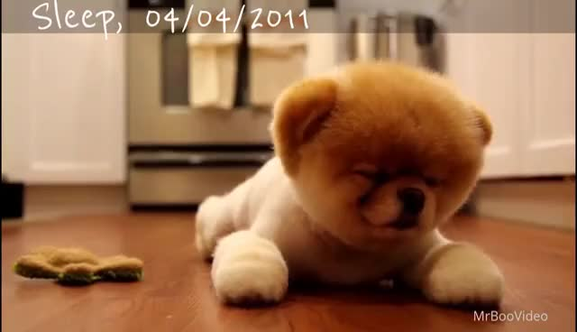 Cutest Dog Breed In The World 2016