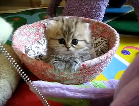 Watch and share Kitten GIFs on Gfycat