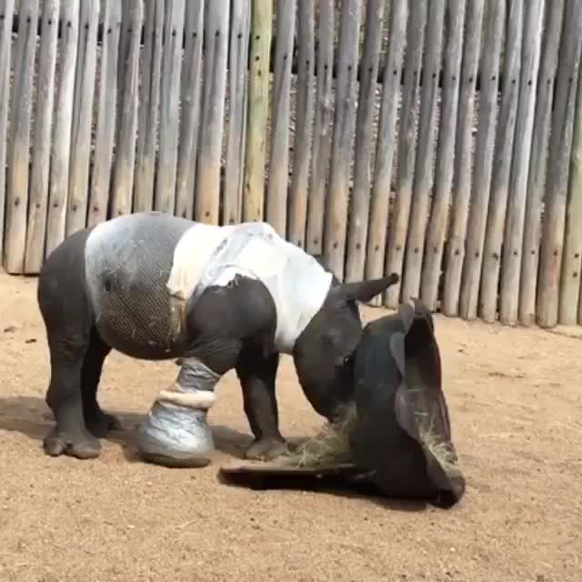 Watch Arthur the rhino GIF by PM_ME_STEAM_K3YS (@pmmesteamk3ys) on Gfycat. Discover more related GIFs on Gfycat