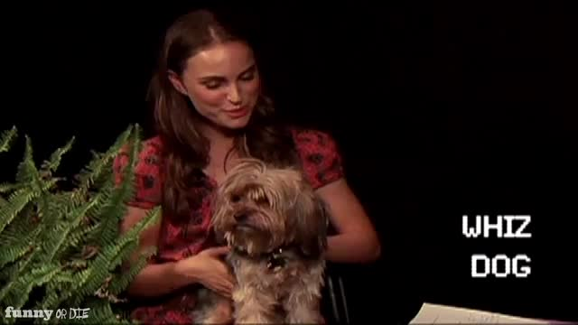 Natalie portman, between two ferns, between two ferns with zach galifianakis, fod, funny or die, funnyordie, natalie portman, zach galifianakis, Whiz the dog GIFs