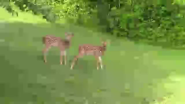 Watch and share Fawns GIFs on Gfycat