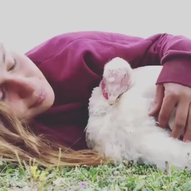 Watch and share Farm Animal Refuge GIFs and Animal Sanctuary GIFs by lnfinity on Gfycat