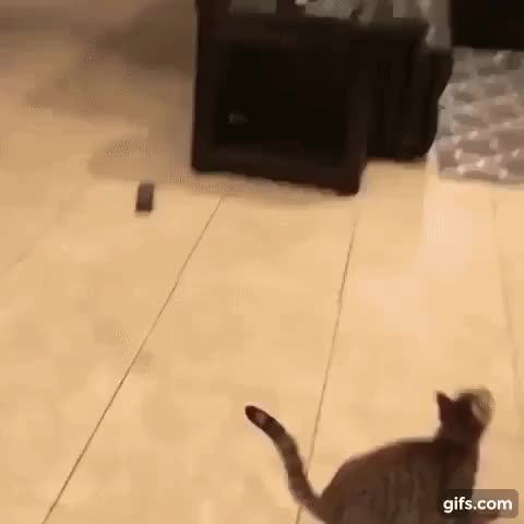 Watch Kitty Fetch GIF by doublenom on Gfycat. Discover more related GIFs on Gfycat