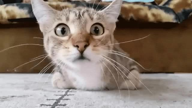 Watch and share Cat GIFs by Reactions on Gfycat