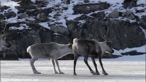 Watch and share Frozen Planet GIFs and Wildlife GIFs on Gfycat