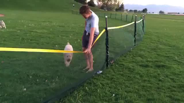 Watch and share Dog GIFs by nyctilaur on Gfycat