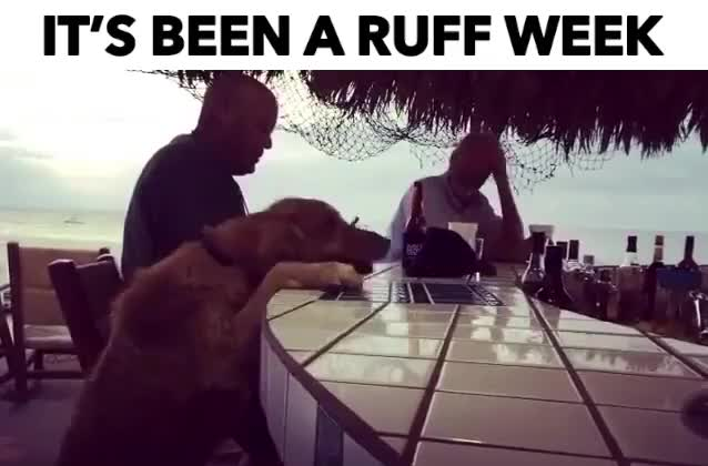 Watch and share IT'S BEEN A RUFF WEEK GIFs by Reactions on Gfycat