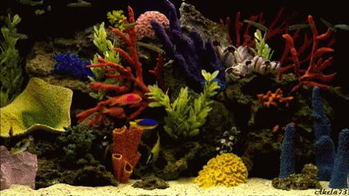 Watch and share Aquarium GIFs by Trevor_Resident on Gfycat