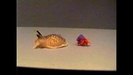 Behavior of Sea Slugs
