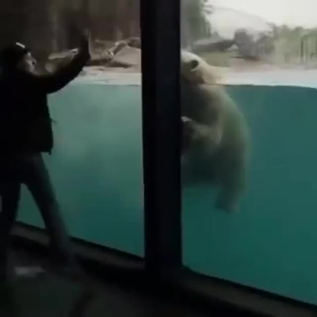 Watch and share Polar Bear GIFs by tothetenthpower on Gfycat