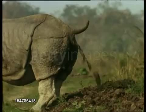 Watch rhino pooping GIF on Gfycat. Discover more related GIFs on Gfycat