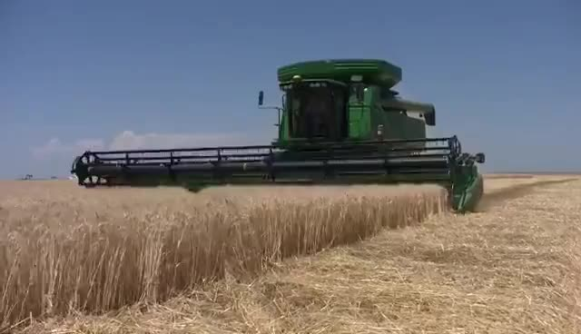 Watch and share Wheat GIFs on Gfycat