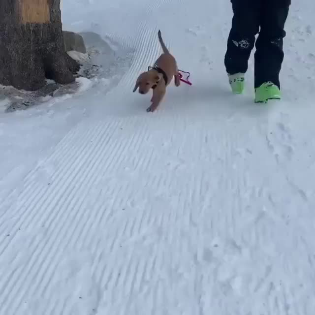 Watch and share Dogsandpals GIFs and Dogsandpaws GIFs by PM_ME_STEAM_K3YS on Gfycat