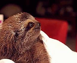 upvotegifs, upvote sloth GIFs