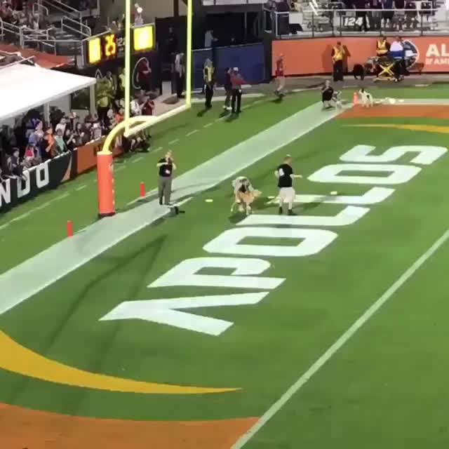 Watch and share Frisbee GIFs and Dog GIFs by Bob on Gfycat