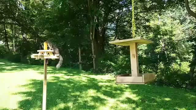Watch and share Cardinal Visit GIFs by Dustin Weber on Gfycat