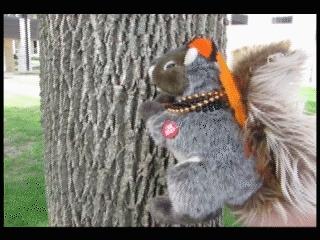 fellowkids, Dramatic Squirrel #worthit GIFs